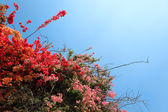 Tropical Flowering Shrubs — Stock Photo