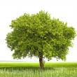 Green tree - symbol of a Green Planet Earth - Stockfoto