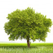 Green tree - symbol of a Green Planet Earth - Stock Photo