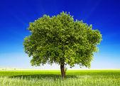 Drzewa na polu — Zdjęcie stockowe