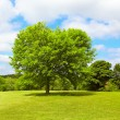 Tree on Springtime — Stock Photo