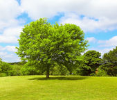 Tree on Springtime — Stockfoto