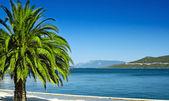 Vakantie in de tropen. — Stockfoto