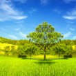 Stockfoto: Green nature
