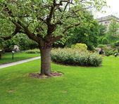 Strom v parku — Stock fotografie