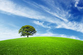 Green tree on green field — Stock Photo