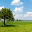 Stock Photo: Agricultural green space