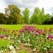 Beautiful spring park — Stock Photo