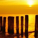Golden sunset — Stock Photo #8533544
