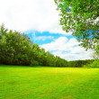 Summer landscape with green grass — Stock Photo