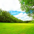 Stock Photo: Summer landscape with green grass