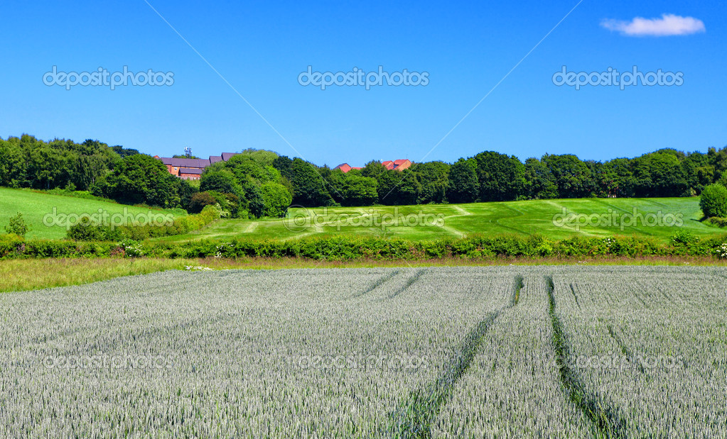 Rural spring landscape — Stock Photo #8609432