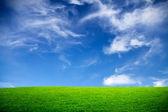 Spring, green field — Stock Photo