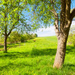Spring orchard — Stock Photo