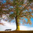 Oak tree with bench in autumn - Stock Photo