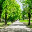Green alley — Stock Photo