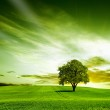 Green landscape — Stock Photo #8913725