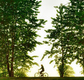 Biker silhouette at sunset — Stock Photo