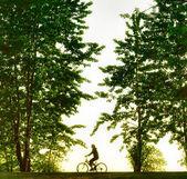 骑自行车的人日落时的剪影 — 图库照片