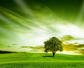 Green landscape — Foto Stock