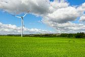 夏の緑の風景 — ストック写真