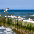 Seagulls and blue sea - Stock Photo