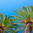 Palm tree on blue sky — Stockfoto