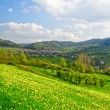 Stock Photo: Green spring valley