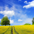 Summer landscape and blue sky — Stock Photo