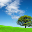 Green tree and blue sky — Stock Photo #9355007