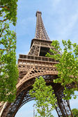 Eiffel Tower and spring trees — Stock Photo