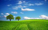 Green field in spring — Stock Photo