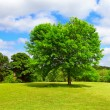 Green nature place - Stock Photo