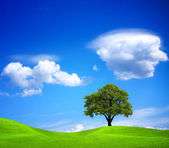 The tree on the outskirts — Stock Photo