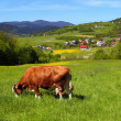 Royalty-Free Stock Photo: Cow on green meadow