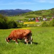 Cow on green meadow - Stock Photo