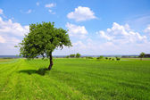 Green plains — Stock Photo