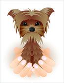 Gracioso yorkshire terrier — Vector de stock
