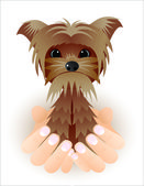 Gracioso yorkshire terrier — Vector de stock