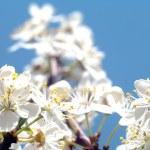 Flowers — Stock Photo #10234880
