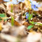 Flowers — Stock Photo #10386564