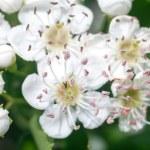Flowers — Stock Photo #10642983