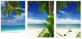 Tropic pics — Stock Photo