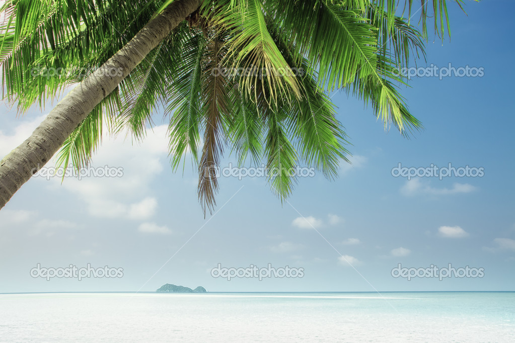 View of nice tropical  beach  with one lonely palm — Stock Photo #10630463