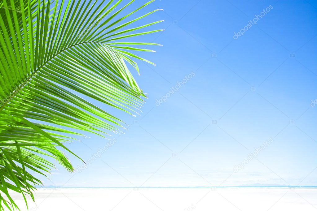 View of nice tropical  beach  with one lonely palm — Stock Photo #10641408