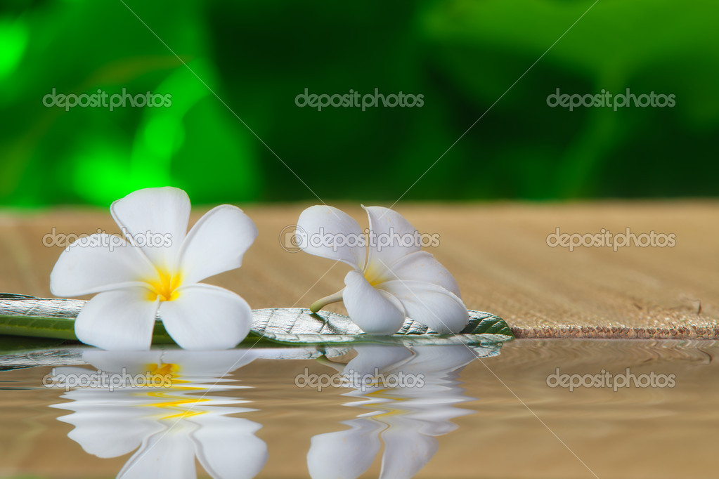 Close up view of   frangipani  flower  on color back  Stock Photo #10641748