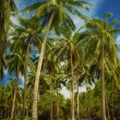 In tropic — Stockfoto