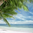 tropictropic — Stock Photo #8067608