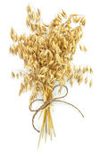 Oat stems with twine — Stock Photo