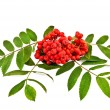 Royalty-Free Stock Photo: Rowan red with leaves